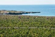 Calamoni di Favignana Apartments & Wine Experiece