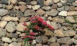 Pantelleria Dream Exclusive Hotel - Sicilia - Pantelaria Isla